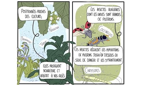 BD Agrocomics
