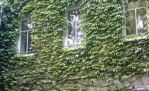 Bulletin murs végétalisés