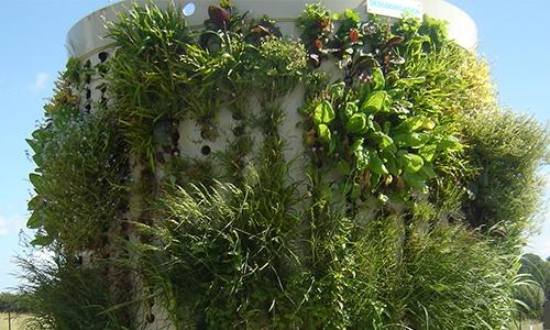 Dépollution par les plantes
