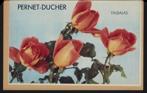 Illustration de roses issue de la Revue Horticole de 1948