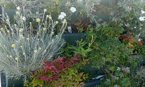 RH murs et toits végétaux