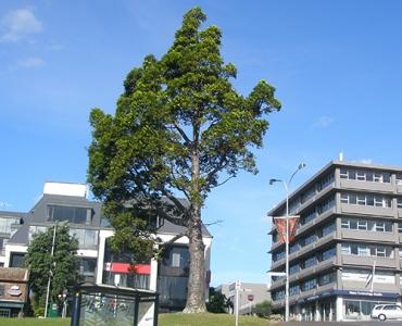 Services écosystémiques arbres urbains