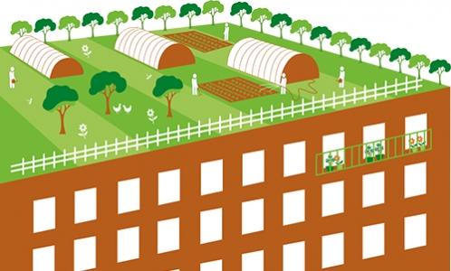 Synthèse agriculture urbaine